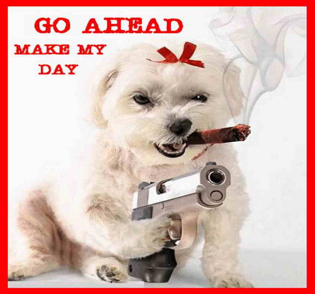 funny dog pics with guns - photo #15