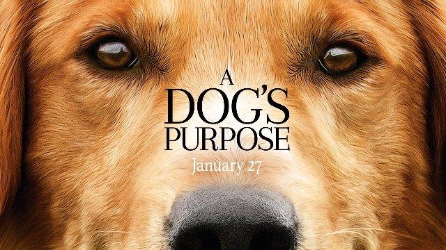 Resultado de imagem para '4 Vidas de Um Cachorro filme