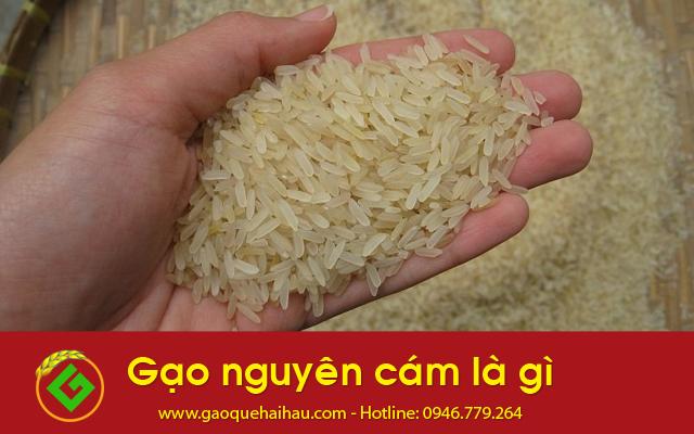 Gạo nguyên cám là gì?