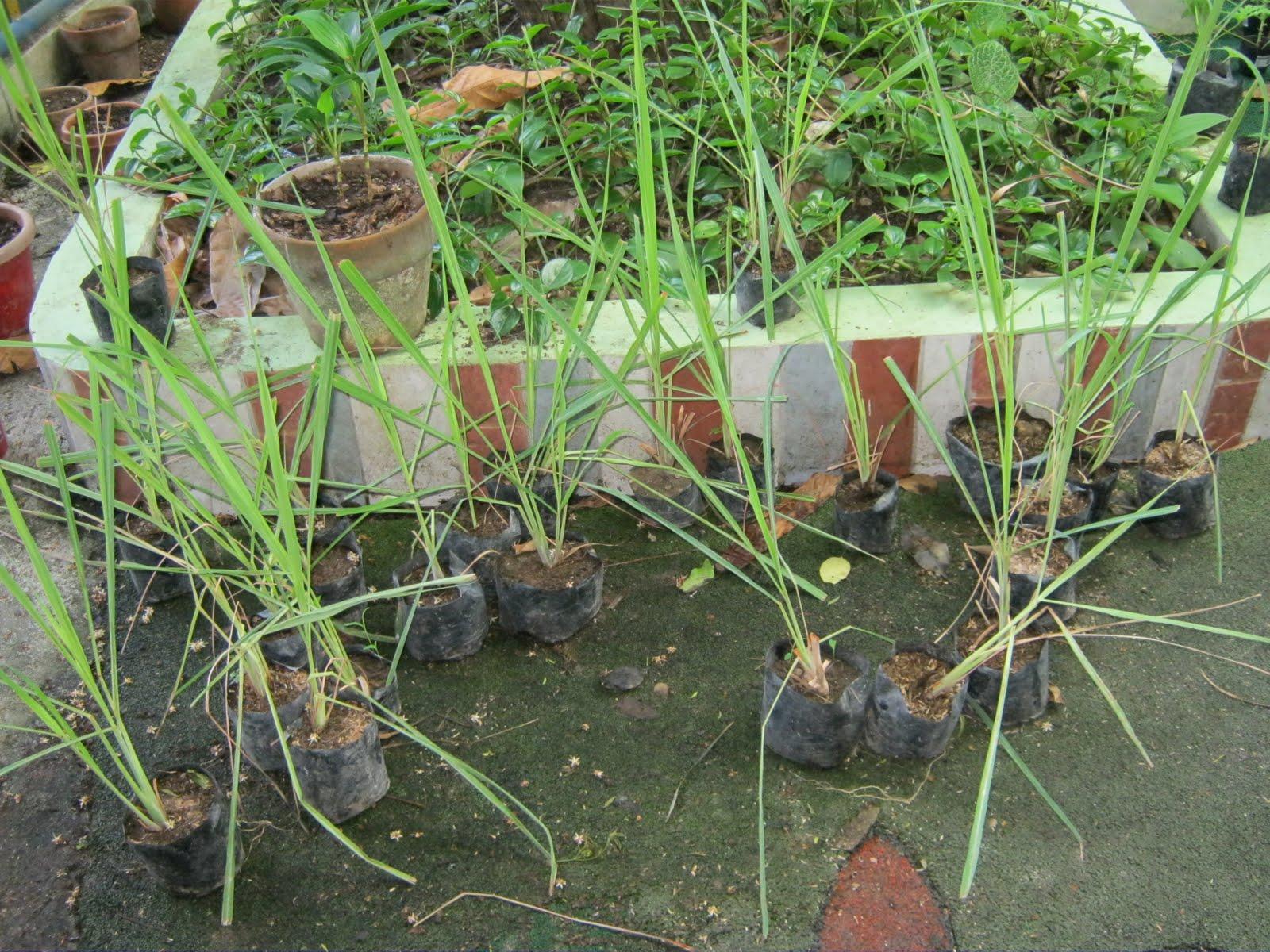 Ferddie's World: Tree Planting at Mater Carmeli School ...