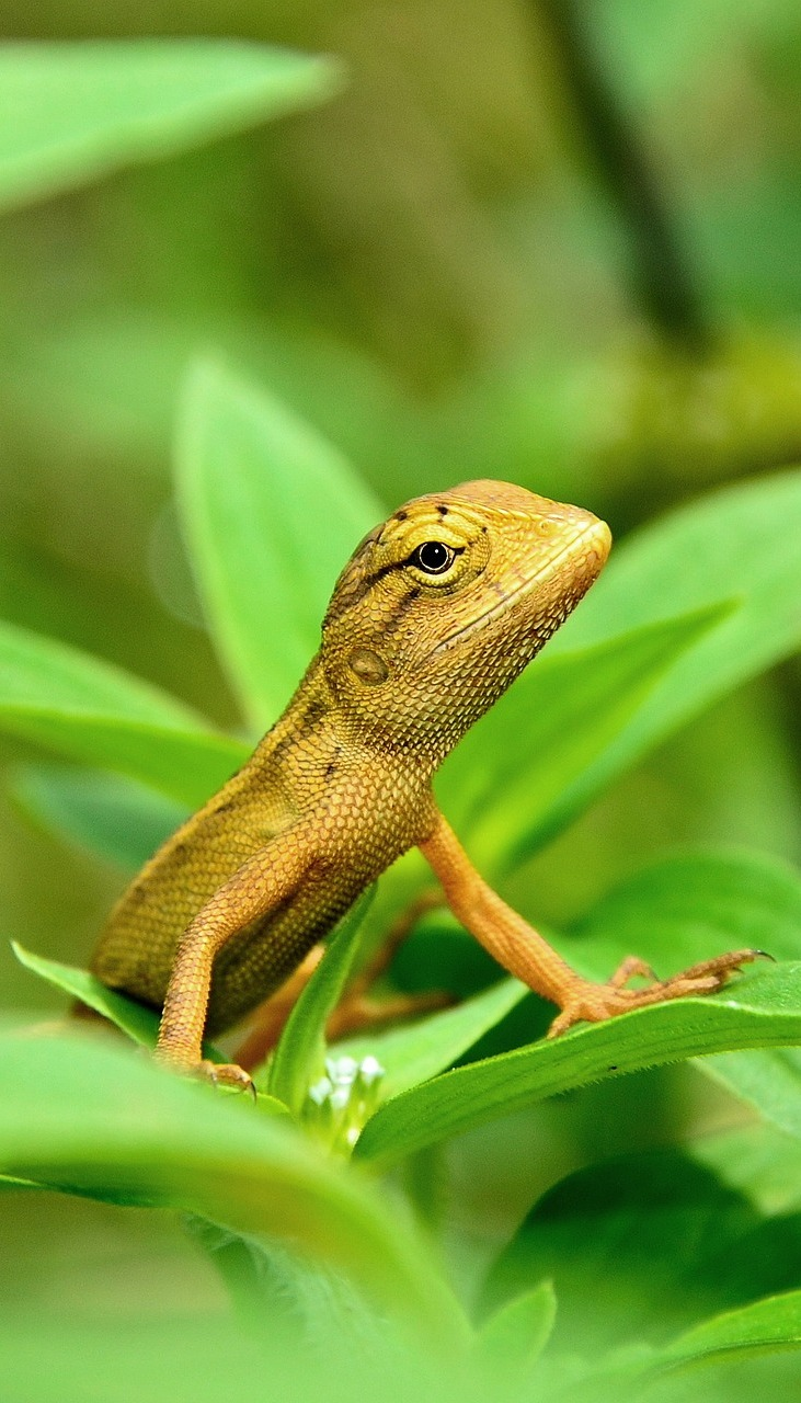 Picture of a yellow lizard.