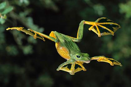 Selain Burung, Hewan Berikut ini Dapat Terbang!