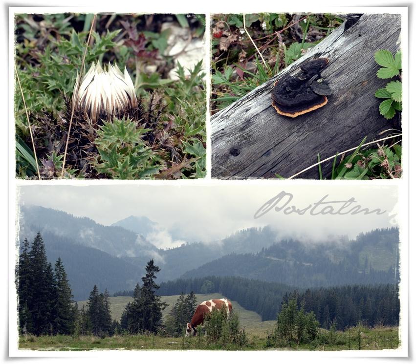 Wandertour in Österreich