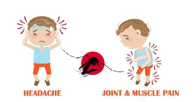 dengue fever symptoms, simptom demam denggi, cara rawat denggi, tips rawat demam denggi