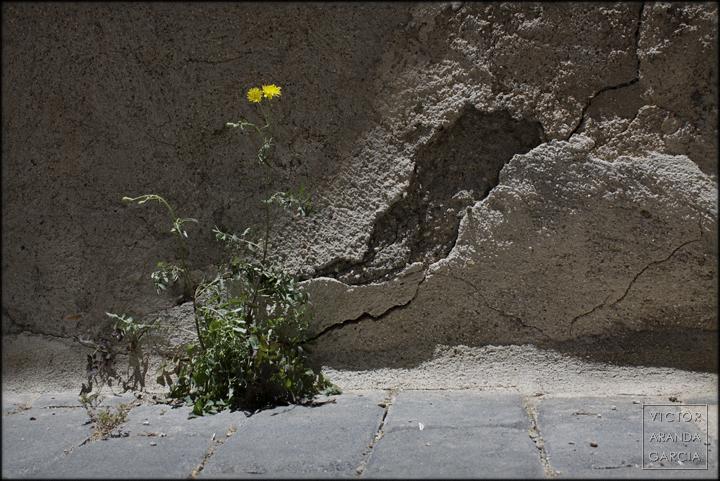 fotografia,planta,flores,lorca,calle,acera,serie,arte