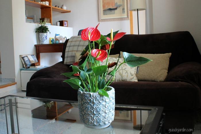 Anturio una planta de interior muy ornamental guia de for Plantas de interior muy duraderas