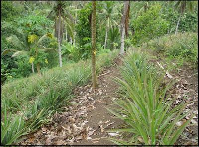 """Tanah merupakan benda yang dibutuhkan untuk kehidupan, karena itu tanah disebut """"resource"""" atau """"sumber kehidupan"""" (Kamagi 2004)."""