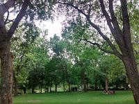 arbres parc la Fontaine Montréal