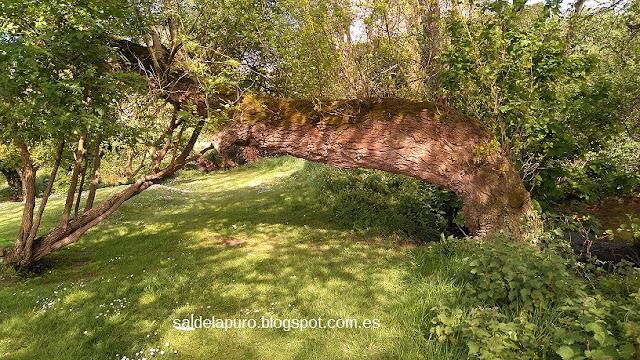 tronco-parque-fluvial-gijon