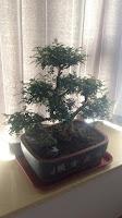 Personal bonsai