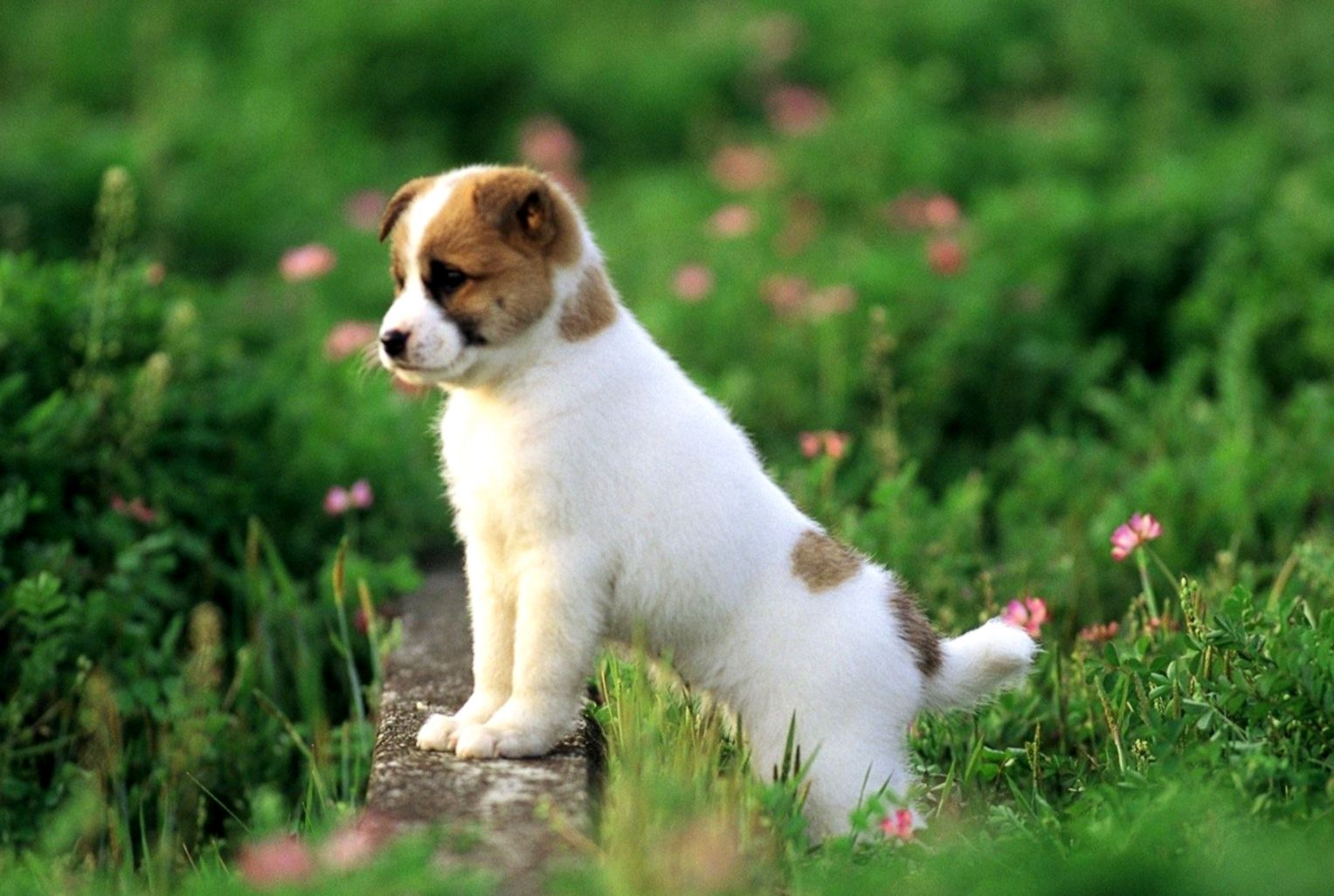 Cute Dog Wallpapers Hd Format Wallpapers