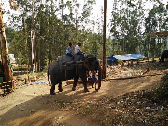 elephant ride in munnar kerala