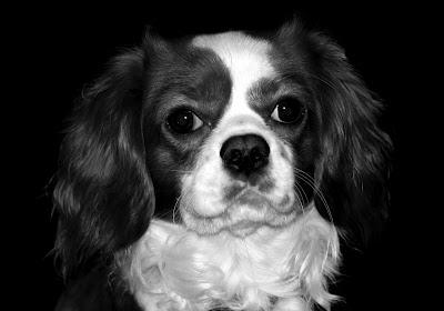 Hoof Behind the Lens - Dog Photo