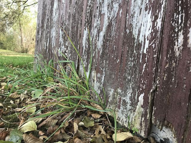Herbstmotiv- modrige Bretter mit Laub und Gras