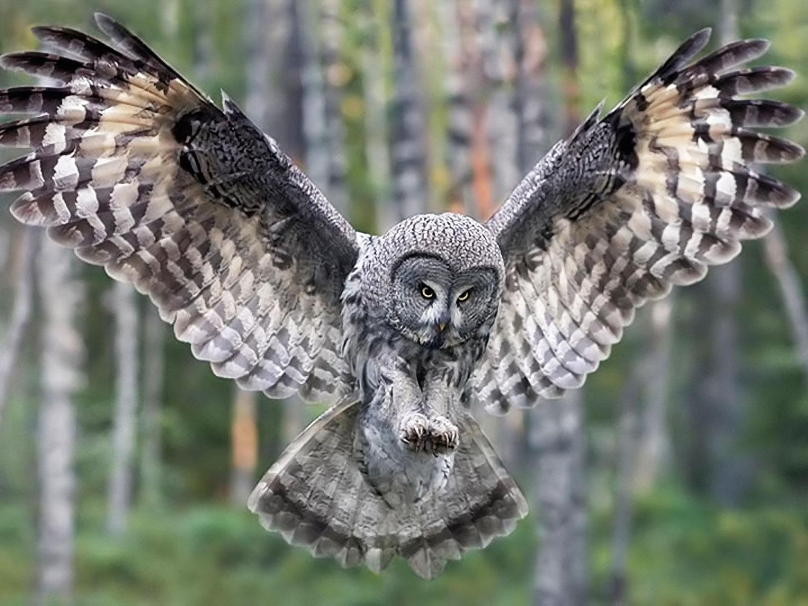 The Animal Burung Hantu