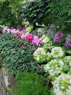 2018 Allan Gardens Conservatory Winter Flower Show massed ornamental cabbage, cyclamen and ivy by garden muses--not another Toronto gardening blog
