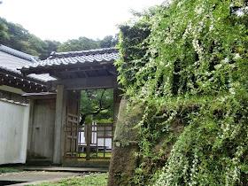 長寿寺のハギ