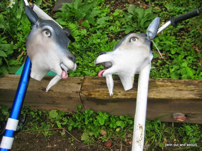 {ErinOutandAbout} Goat Race