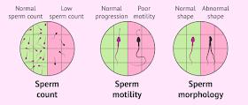 tingkatkan penghasilan sperma berkualiti