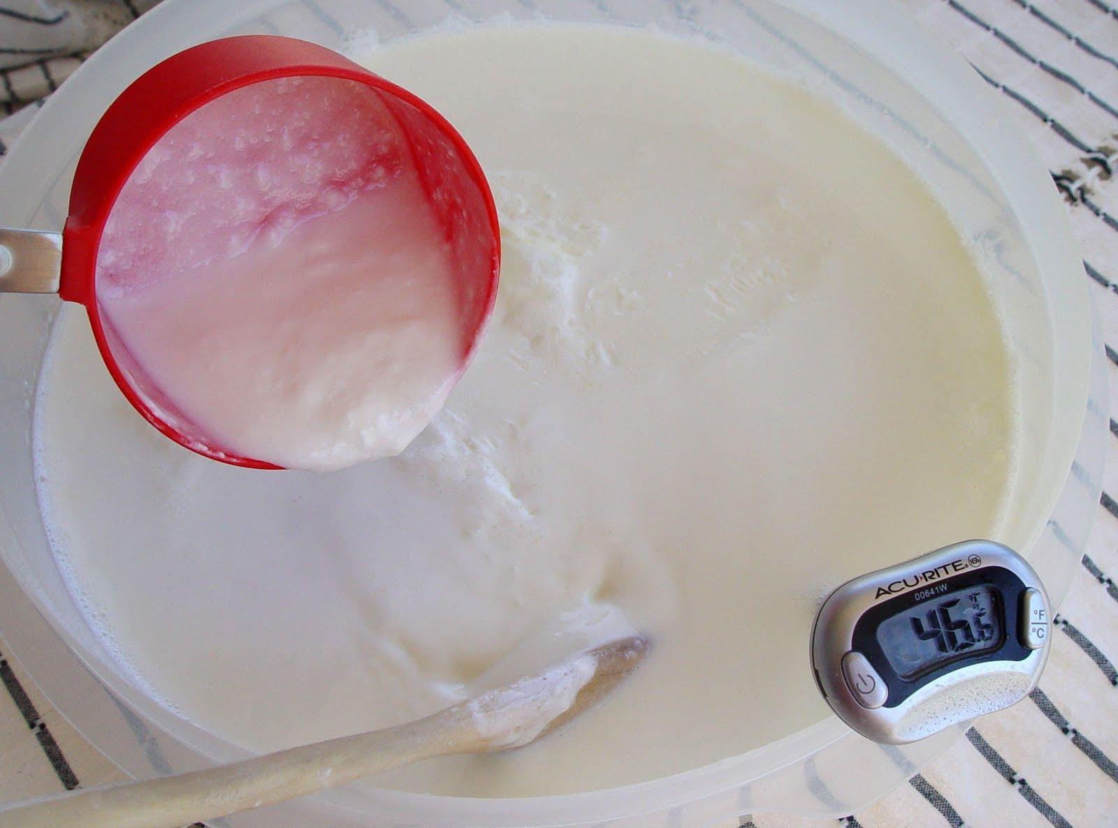 Yoğurt Mayalamak İçin Süt Kaç Derece Olmalı