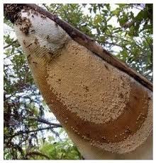 14 Benefits of Wild Bee Honey for Health - Healthy T1ps