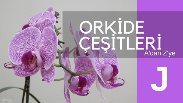 Orkide Çeşitleri J Harfi