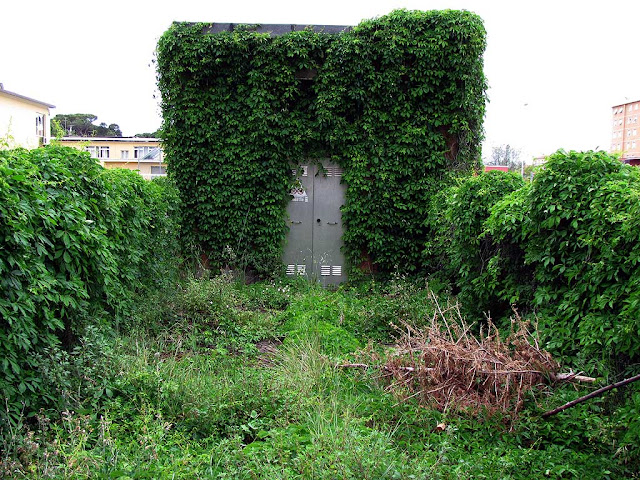Grassy small yard with vine-covered walls, via Manasse, Livorno