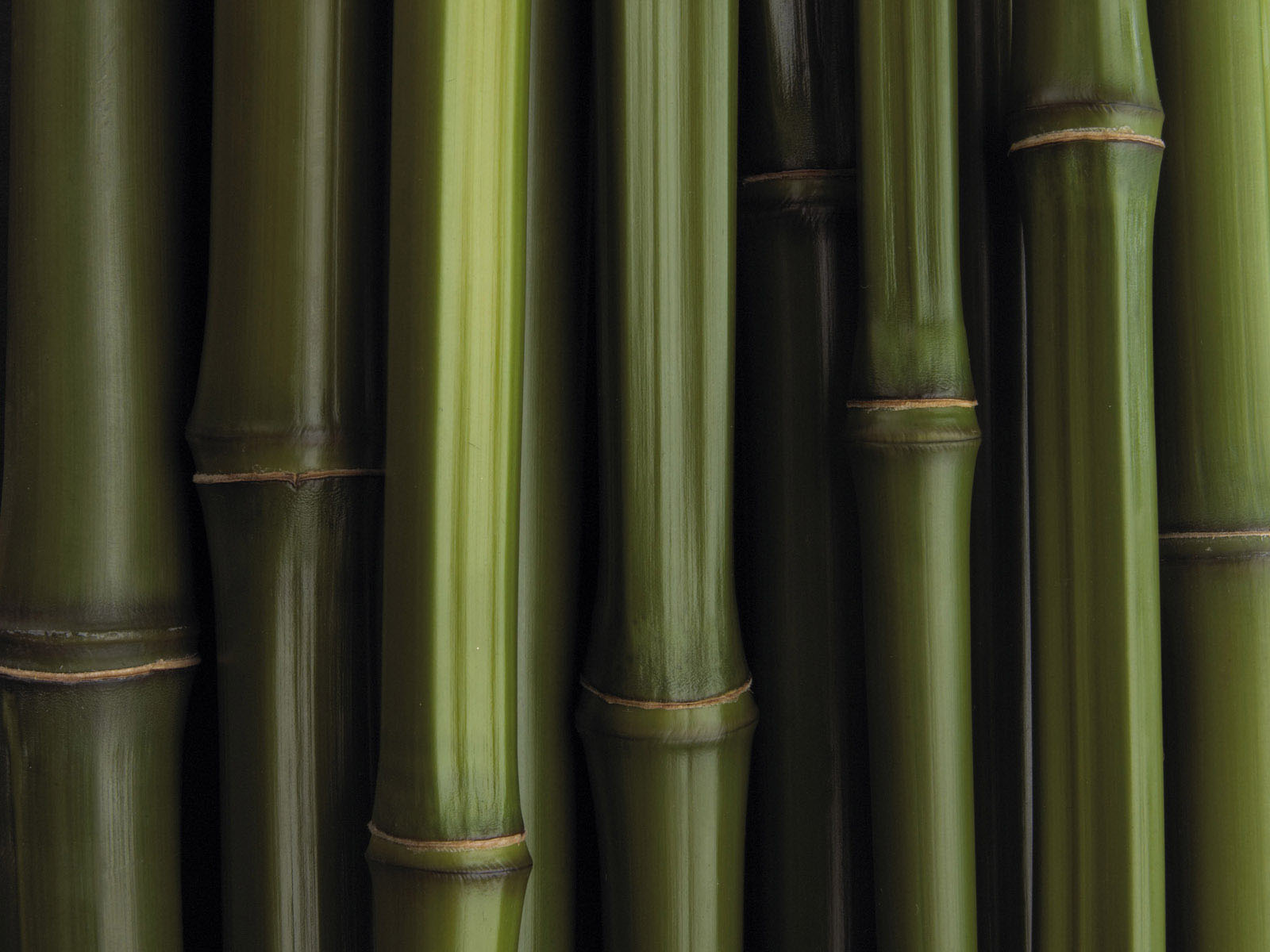 wallpaper bamboo wallpapers
