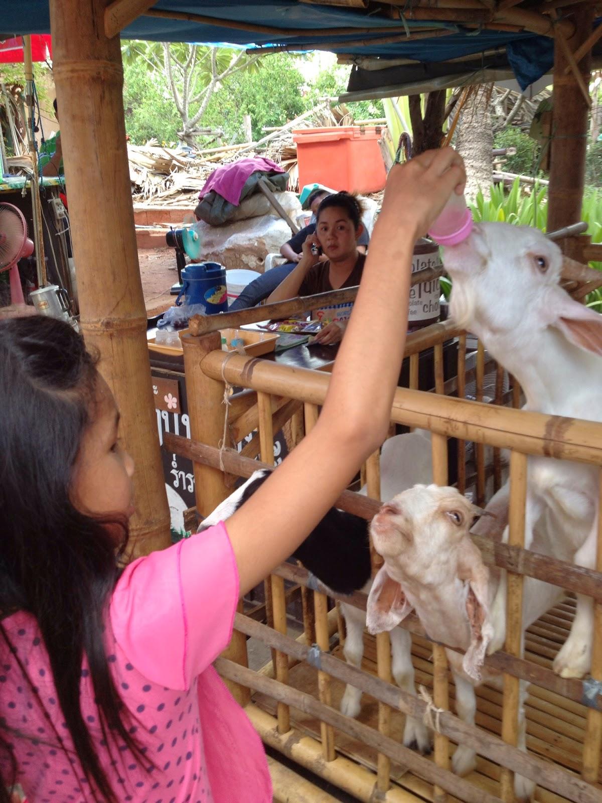 Ayutthaya - Feed some penned in baby goats at Ayothaya Floating Market