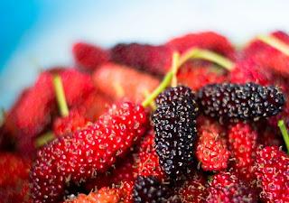 manfaat-buah-murbei-bagi-kesehatan,www.healthnote25.com