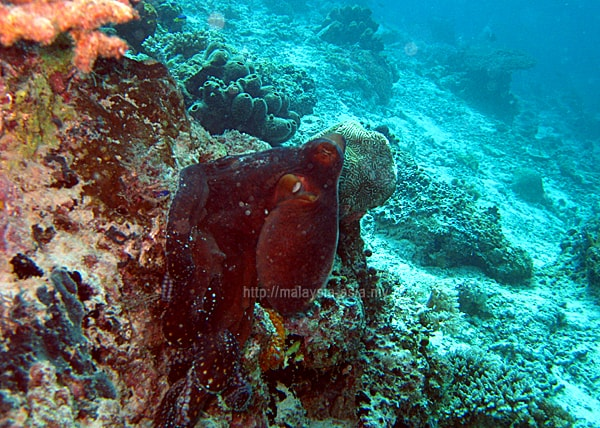 Malaysia Top Dive Site