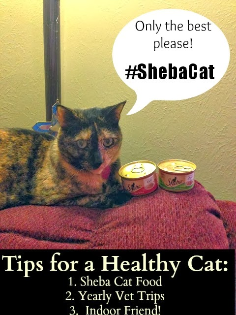 Is Sheba Cat Food Good For My Cat