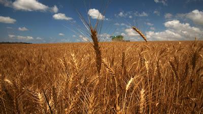 Un grupo de investigadores israelíes encontraron pruebas de la agricultura de cebada en las regiones del norte del Valle del Jordán y en la Alta Galilea. Los descubrimientos fueron posibles gracias a un primer mapeo genético de los granos prehistóricos.