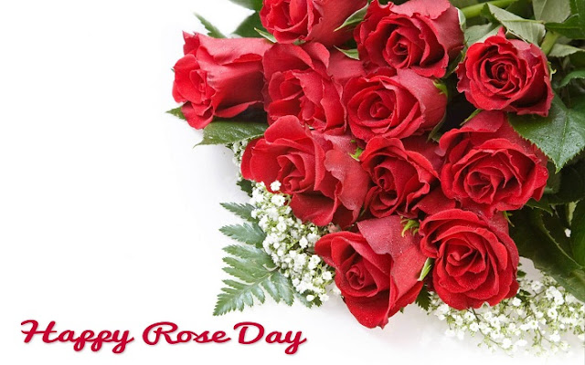 Rose Day Images 2017 Collection