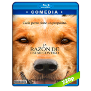 La razón de estar contigo (2017) BRRip 720p Audio Dual Latino-Ingles