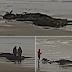 Restos de criatura com mais de 10m aparecem em praia
