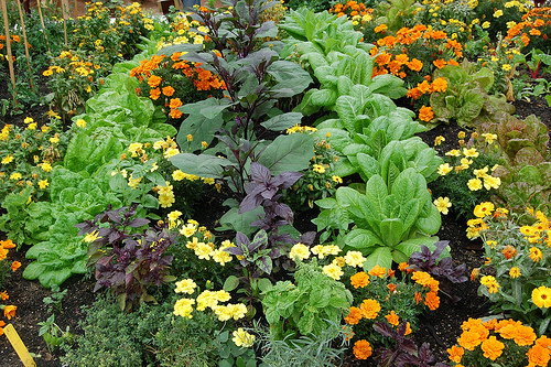 Jeffco Gardener Symposium Sneak Peak Companion Planting By Dustin