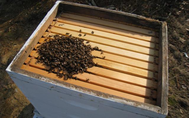 Μελισσοκομικοί χειρισμοί Δεκεμβρίου!