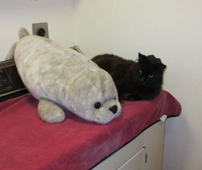 Large plush baby seal with large black cat