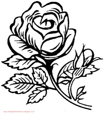 gambar bunga mawar - 7