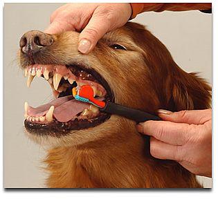 escovando dentes de cão