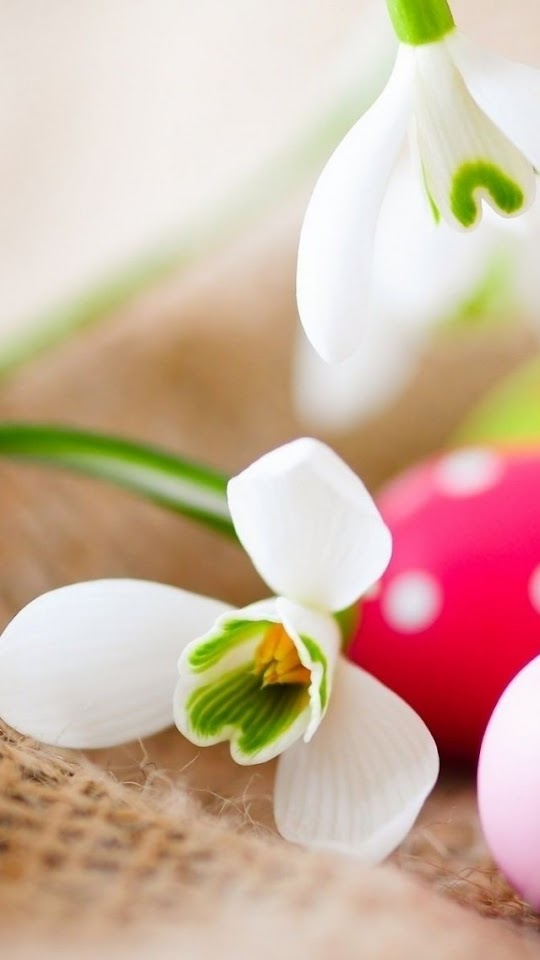 Easter Eggs And Snowdrop  Galaxy Note HD Wallpaper