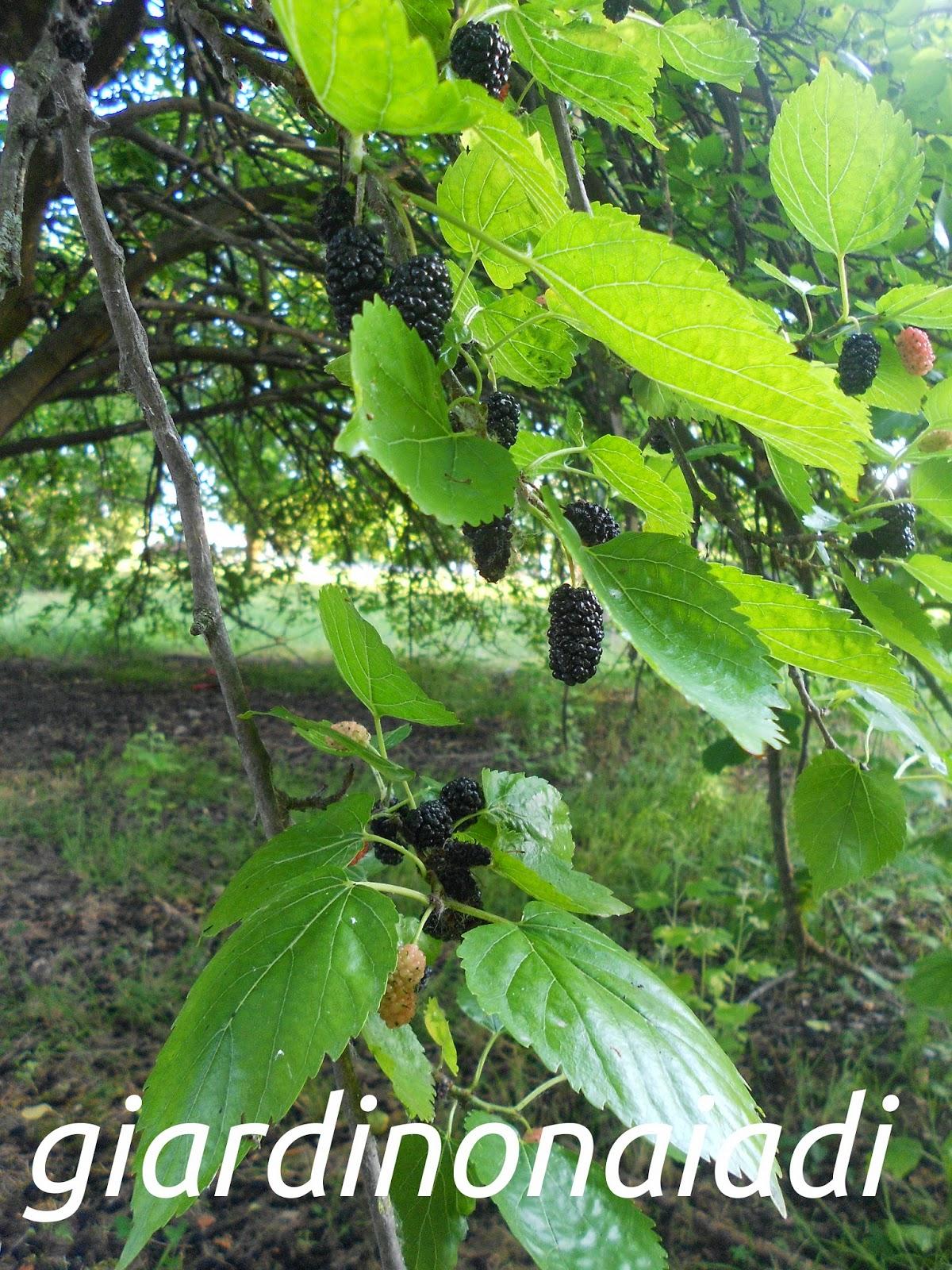 Alberi Ornamentali Da Giardino alberi colorati da giardino
