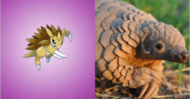Sandslash is a pangolin
