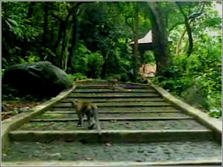 Bukit Plangon Cirebon