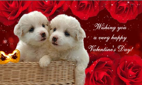 Happy Valentines Day Pictures Free Download For Lovers