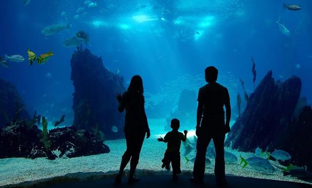 Family Tour no Monterey Bar Aquarium na Califórnia