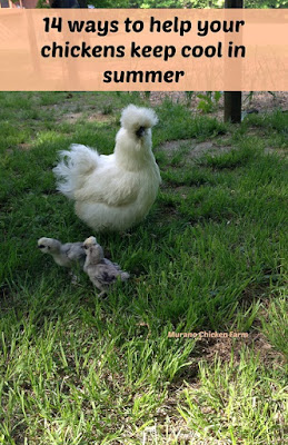 prevent heat stroke chickens