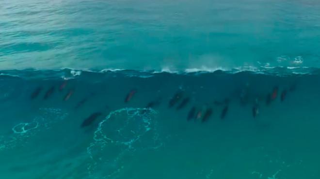 delfines olas