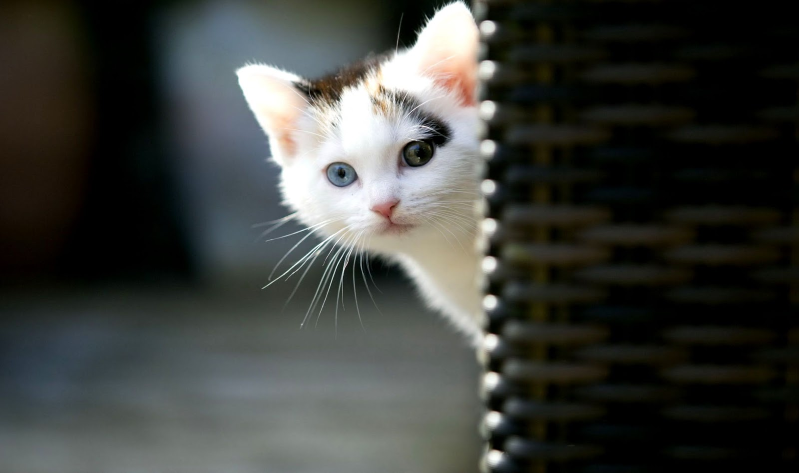 Hd Wallpapers Cat Cool Photos